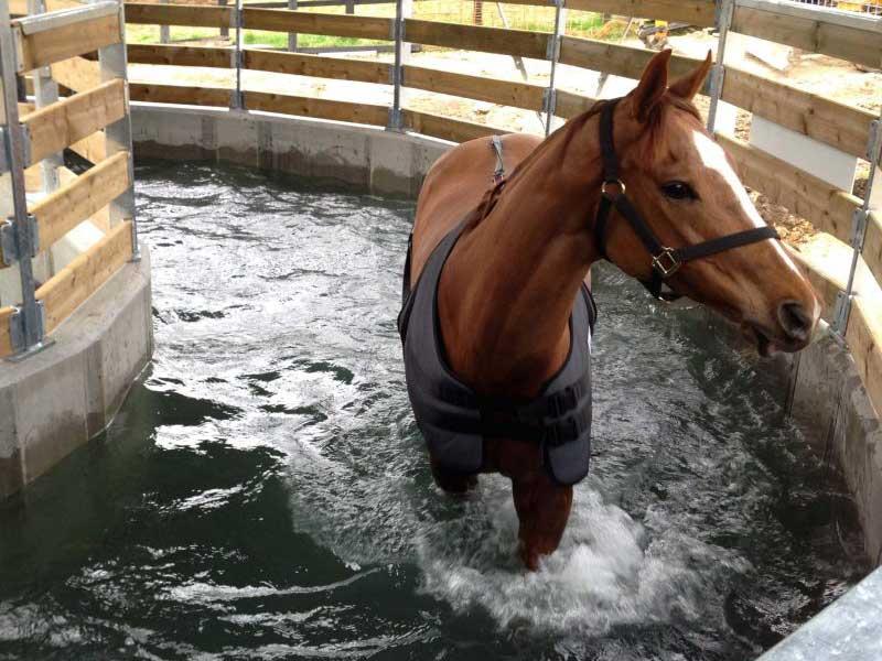 Equine Water Walker