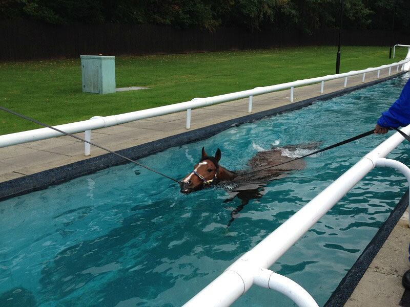 Swimming pool Equine