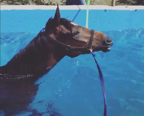 Equine Hydrotherapy Pool