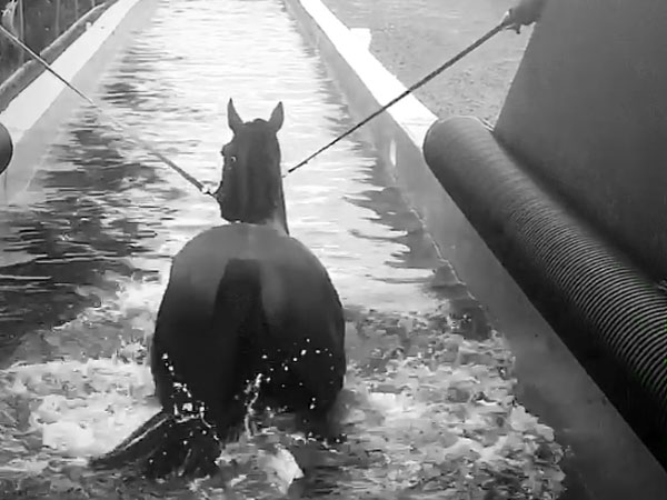 horse swimming pool