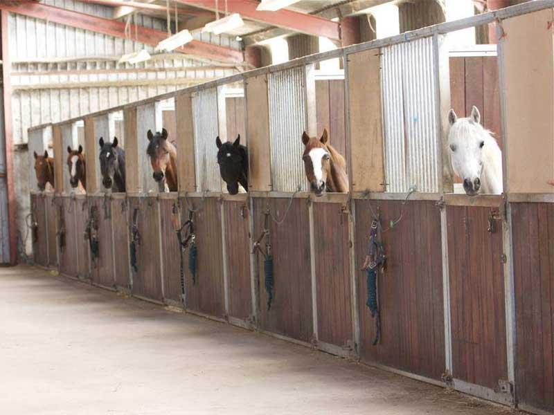 kilbrein equine rehabilitation