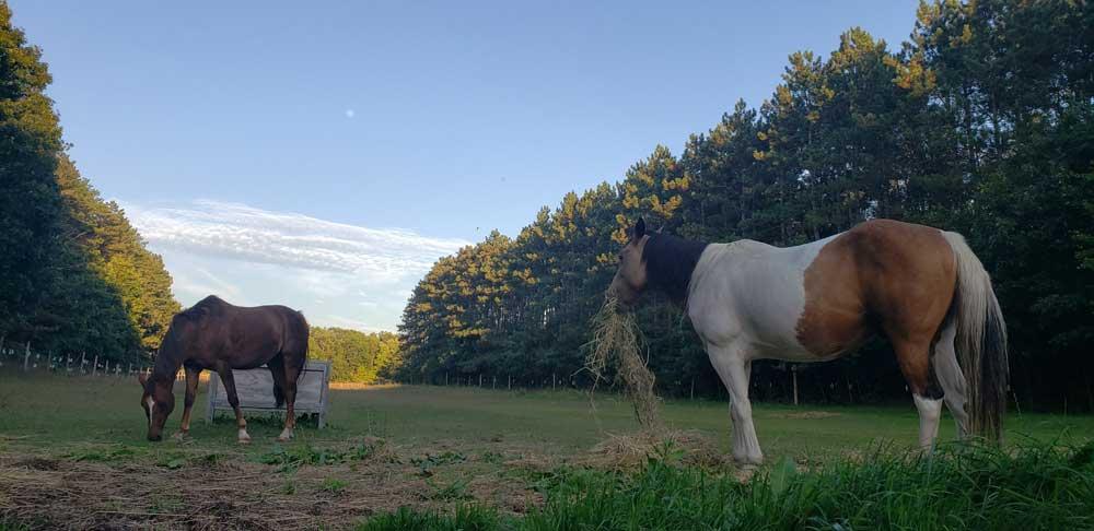 kilbrien equine 11