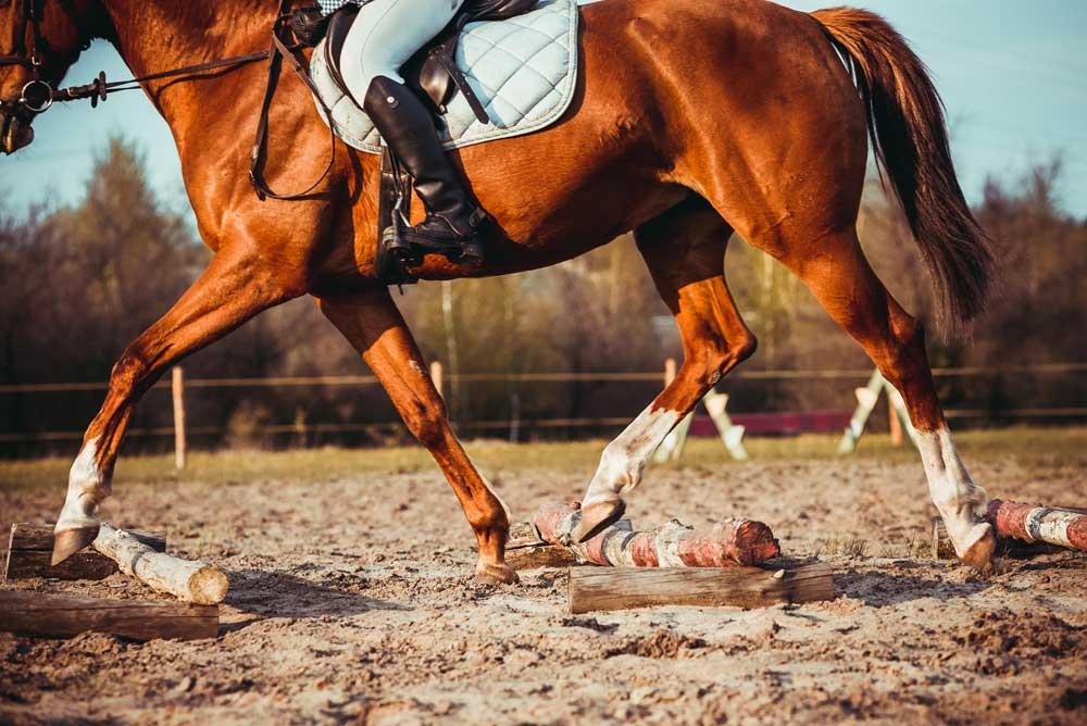 kilbrien equine 3