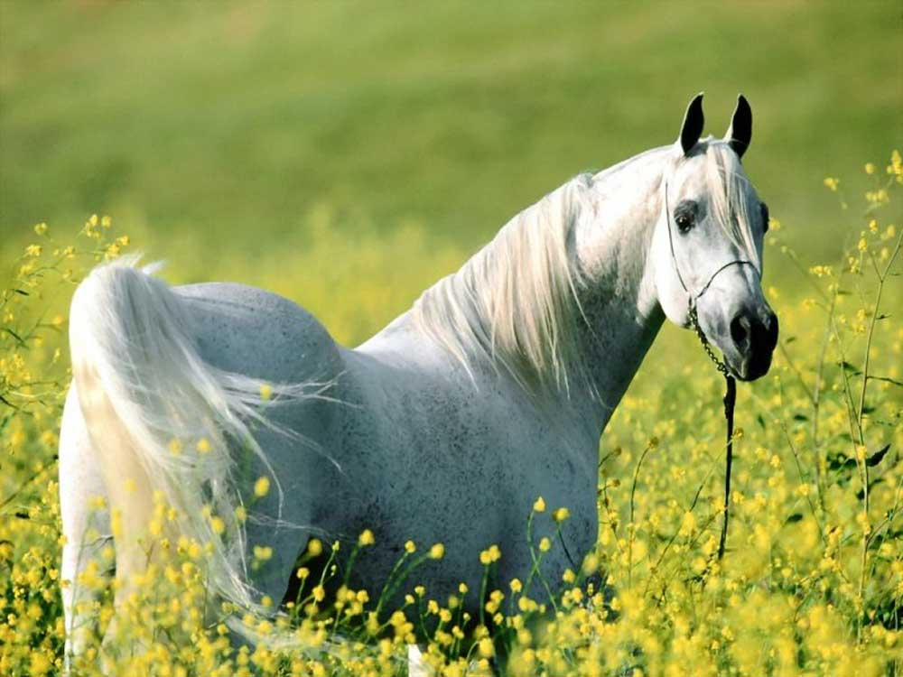 kilbrien equine 4