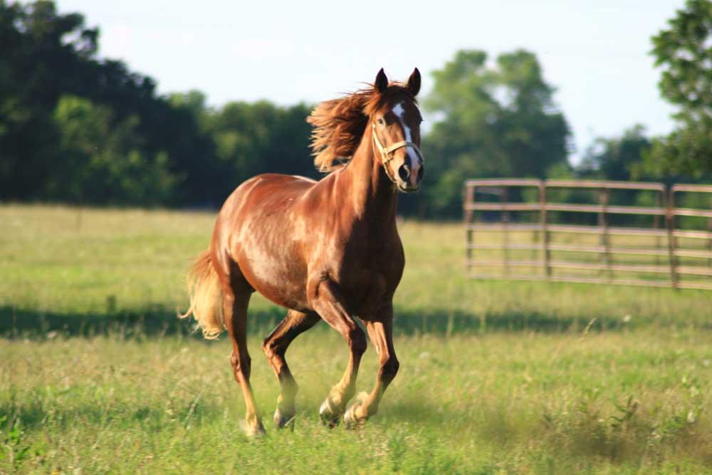 kilbrien equine 10